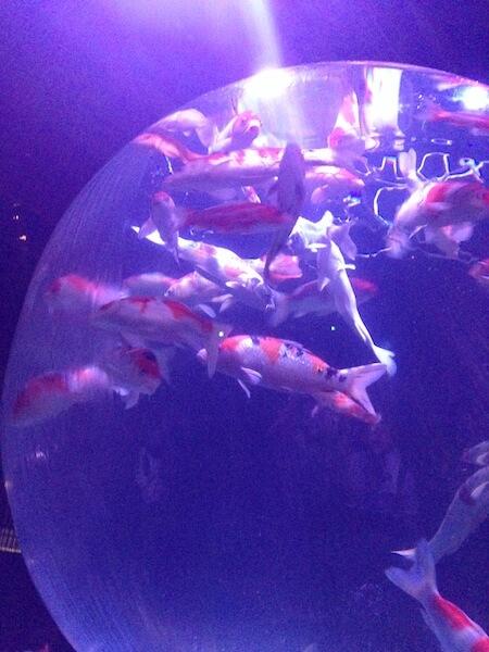 """รีวิวเทศกาลปลาทอง """"อาร์ตอควาเรียม'' ฤดูร้อนโตเกียว"""