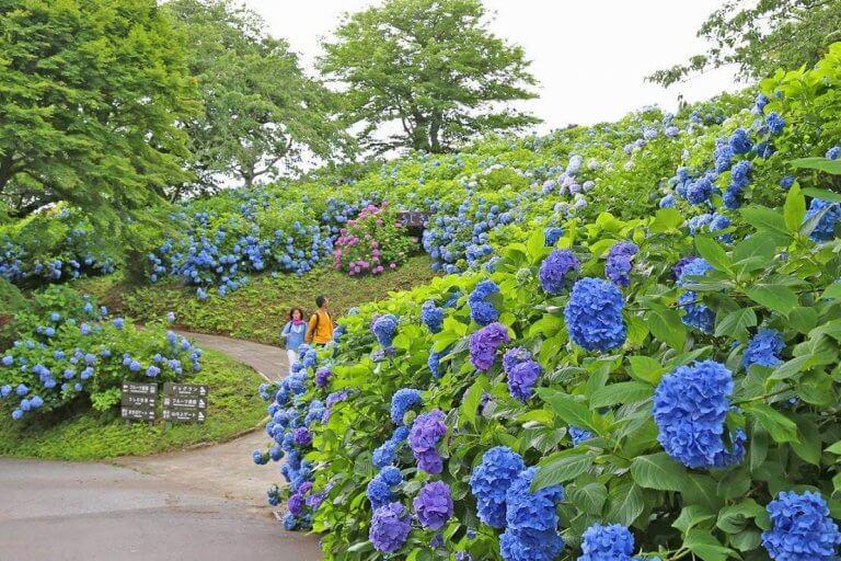 ชมดอกไม้ สัมผัสธรรมชาติและสัตว์นานาชนิดอย่างใกล้ชิดที่ Mother farm