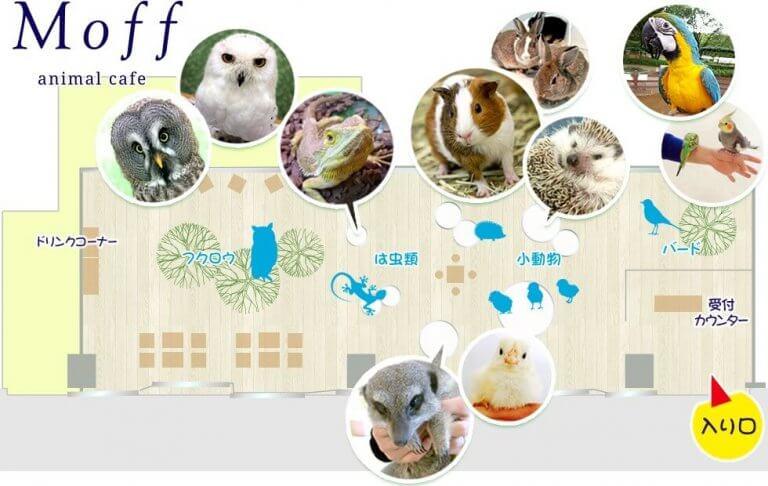 [Moff Animal Cafe] คาเฟ่สัตว์เลี้ยง สำหรับคนเลี้ยงสัตว์ไม่ได้