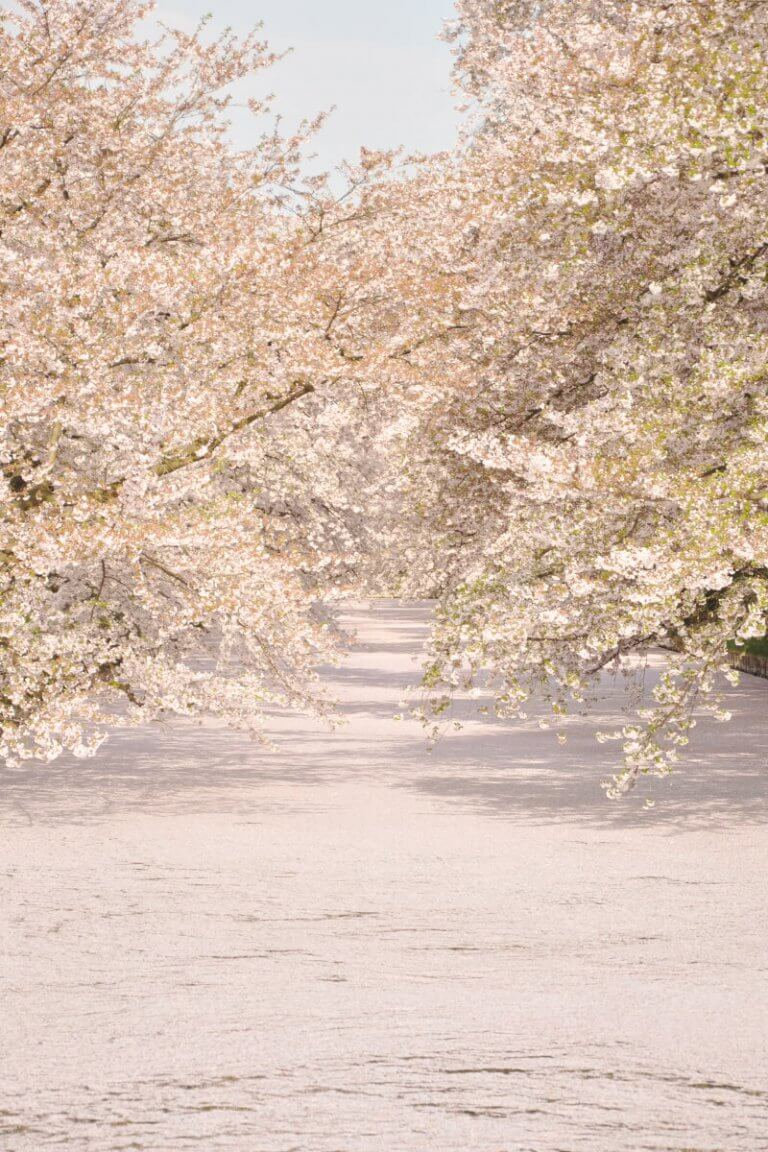 20 สถานที่ชมซากุระ?ทั่วญี่ปุ่น