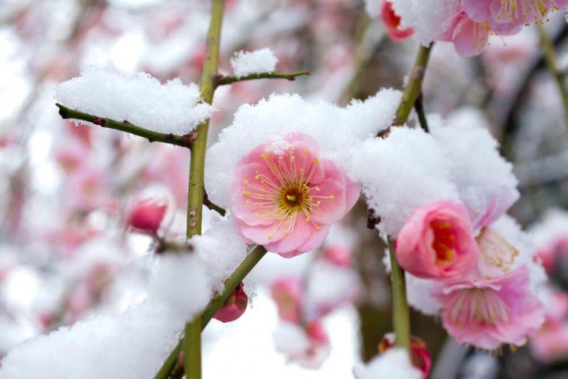 snow-in-spring