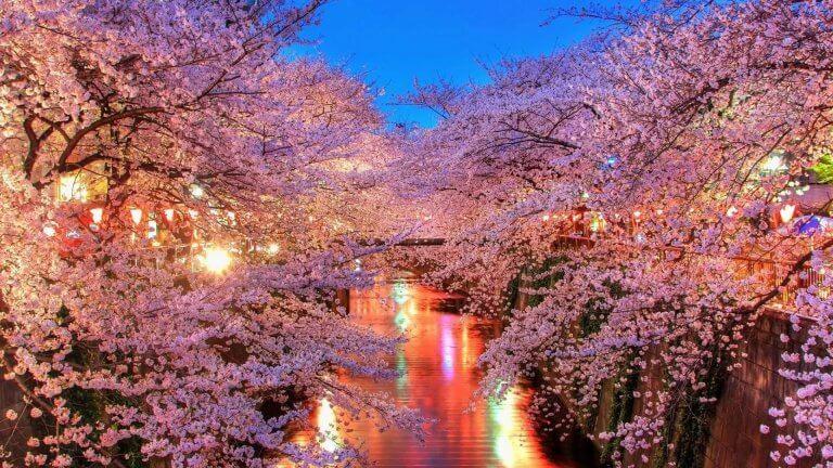 ยอดฮิต 9 จุดชมซากุระ เดินทางสบายโดยรถไฟจากโตเกียวไม่เกิน 2 ชั่วโมง