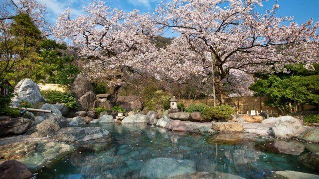 CR:http://www.yumetsuzuri.com/flower/1W_L8355.jpg