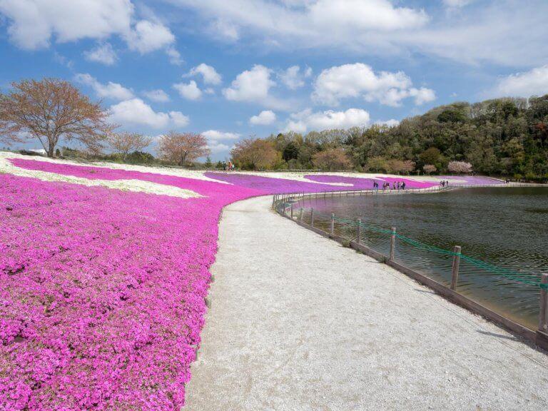 ชิบะกับงานเทศกาลดอกไม้ฤดูใบไม้ผลิ ที่หมู่บ้านเยอรมันโตเกียว Tokyo German Village