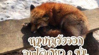 Fox vill_190307_0006