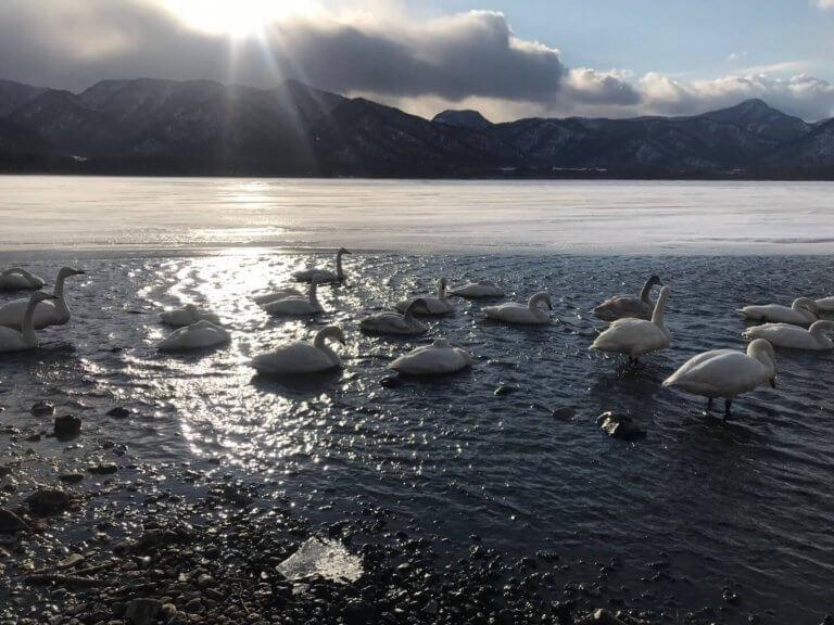 ทริปดูนกที่ทะเลสาบ อะคัง, ฮอกไกโด ต้านความหนาว ขาวไปทั่วเฟรม