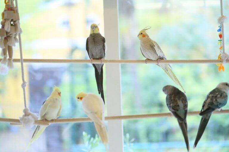 4 คาเฟ่สัตว์สุด CUTE ในโตเกียว ให้คุณสัมผัสความน่ารักอย่างใกล้ชิด