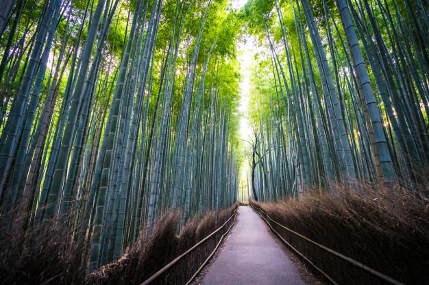 เที่ยวครอบคลุม Kansai Thru Pass