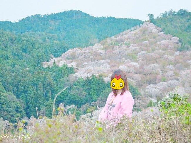 ซากุระบานกลางหุบเขา – เดินชิลยาวๆที่เม้าท์โยชิโนะ (Mount Yoshinoyama)