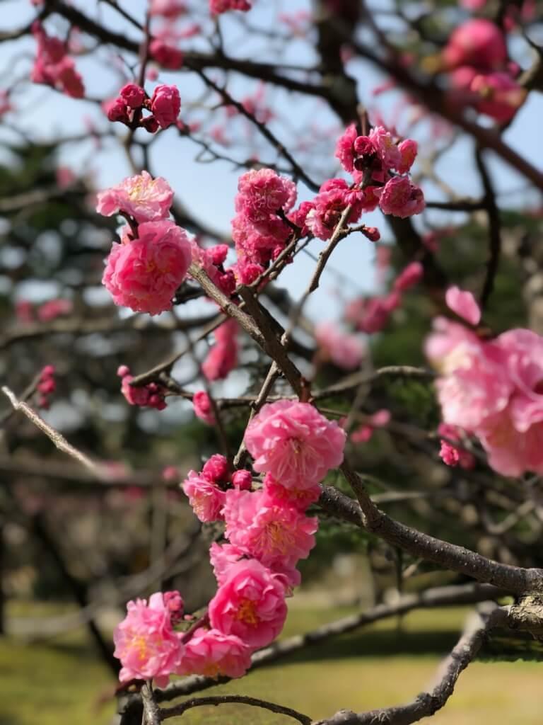 Kanazawa เมืองศิลปิน สวนเค็นโระคุเอ็น ปราสาทคาซานาว่า และคาเฟ่ย่านโอมิโช ที่มีอีกชื่อว่า 'ซีแอตเติ้ลเจแปน'