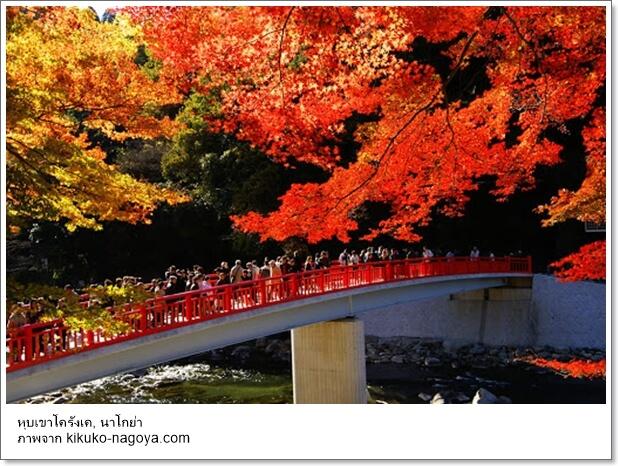 10 สุดยอดสถานที่ชมใบไม้เปลี่ยนสีที่ญี่ปุ่นปี 2020