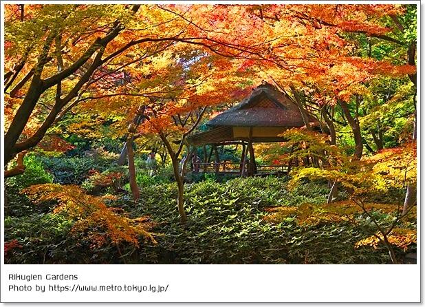 10 จุดชมใบไม้เปลี่ยนสีสุดฟิน! เช็คอิน ณ กรุงโตเกียว