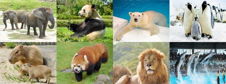 4 โลกน่ารักของคนรักสัตว์ ในญี่ปุ่น