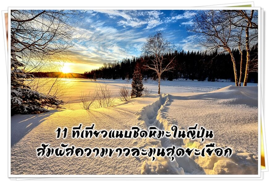 Cover-Snow Winter