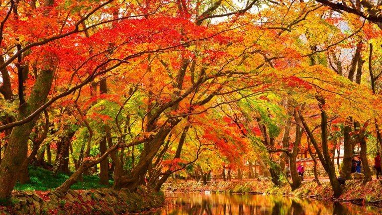 กิจกรรมที่คนญี่ปุ่นนิยมทำในแต่ละฤดู