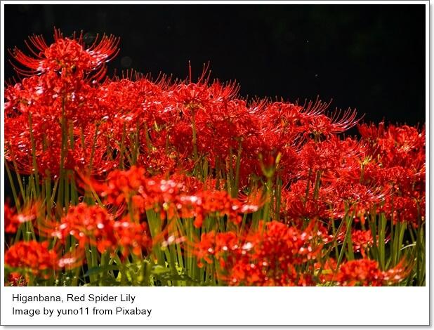 ทำความรู้จักความหมายของดอกไม้ชื่อดังในญี่ปุ่น: Hanakotoba